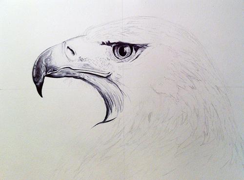 proceso de dibujo del águila 1