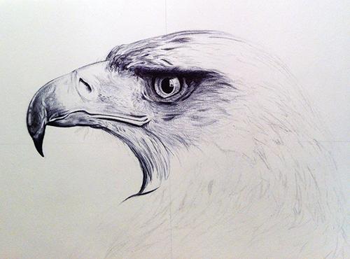 proceso de dibujo del águila 2