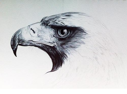 proceso de dibujo del águila 3