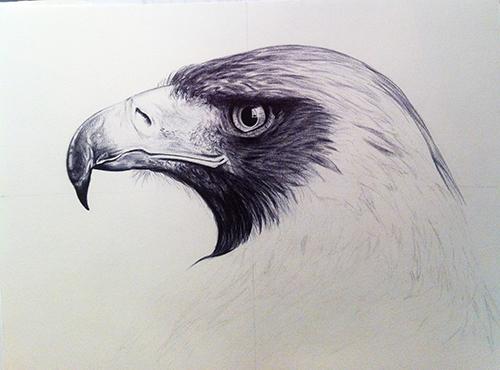 proceso de dibujo del águila 4