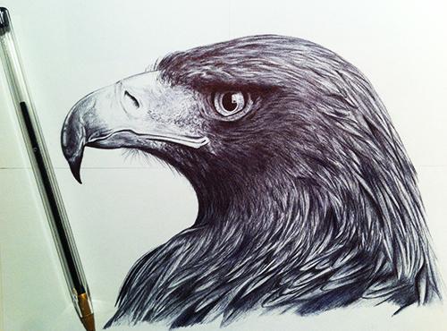 proceso de dibujo del águila 5