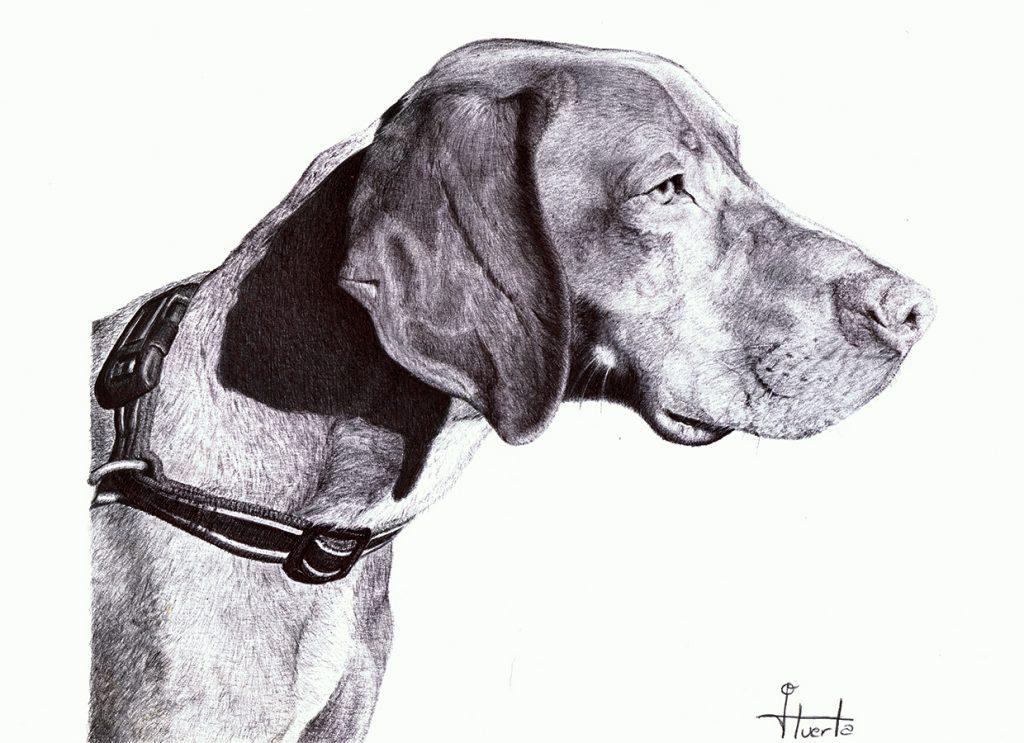 Retrato de un perro a bolígrafo