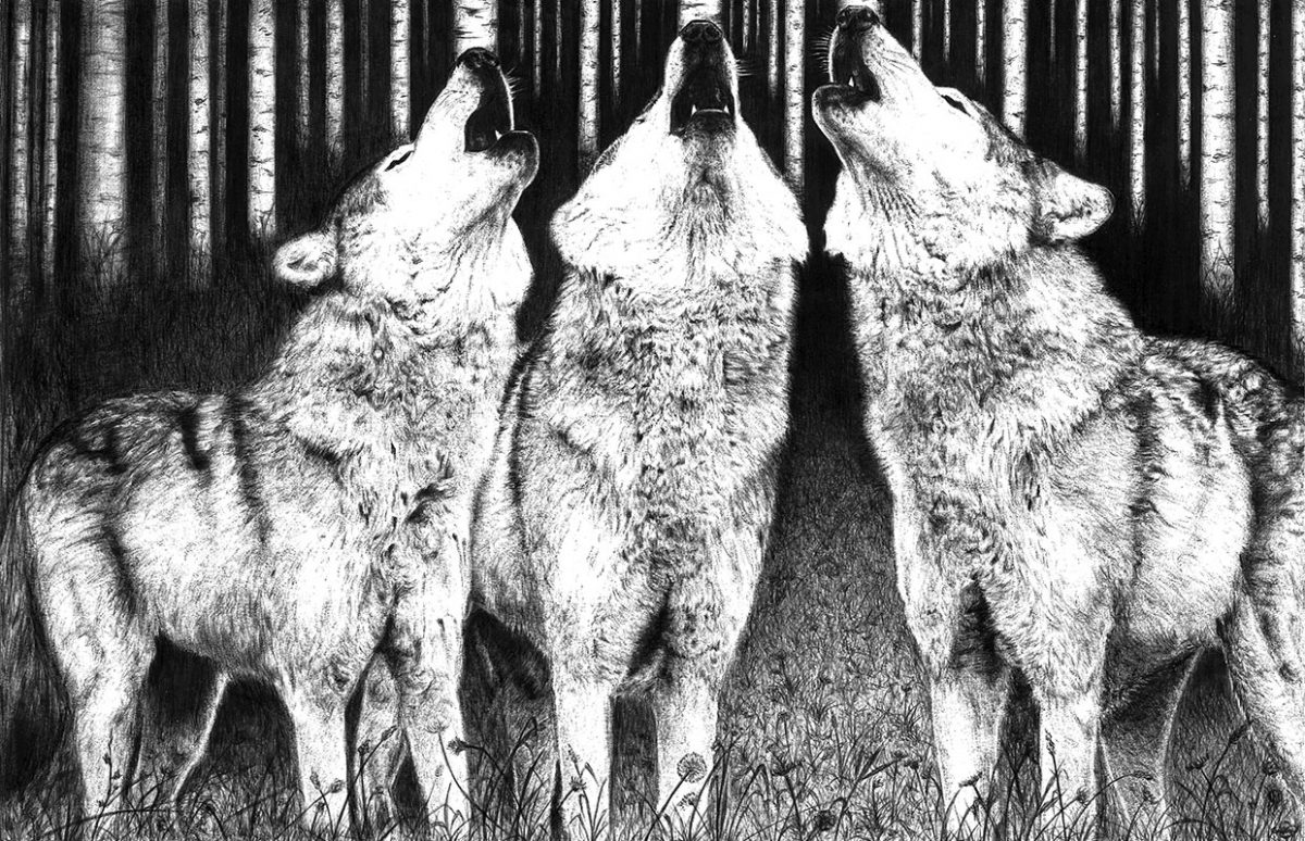 Dibujo de lobos a bolígrafo